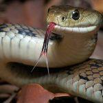 Каким именем можно назвать змею?