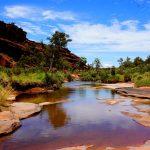Список сумчатых животных в Австралии