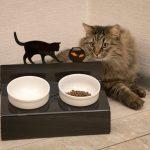 Как выбрать миску для кошки?