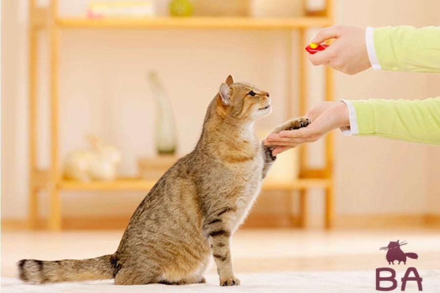 Дрессировка домашних кошек