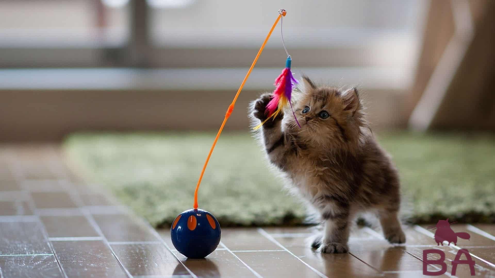 Играющий кот