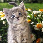 Как приучить котенка к своему имени?